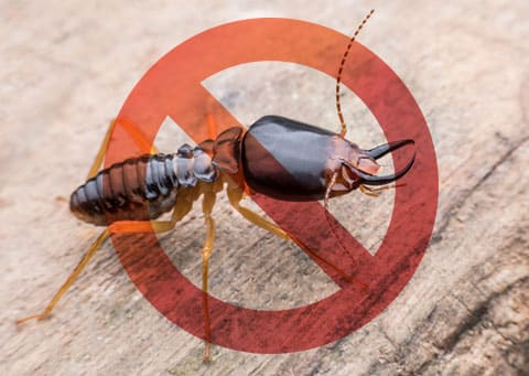 Tips to Prevent & Detect Termites